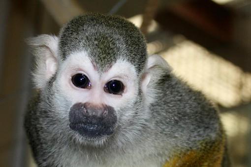 Челябинский зоопарк просит помощи в поимке обезьянки