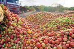 Санкции вернули яблоками