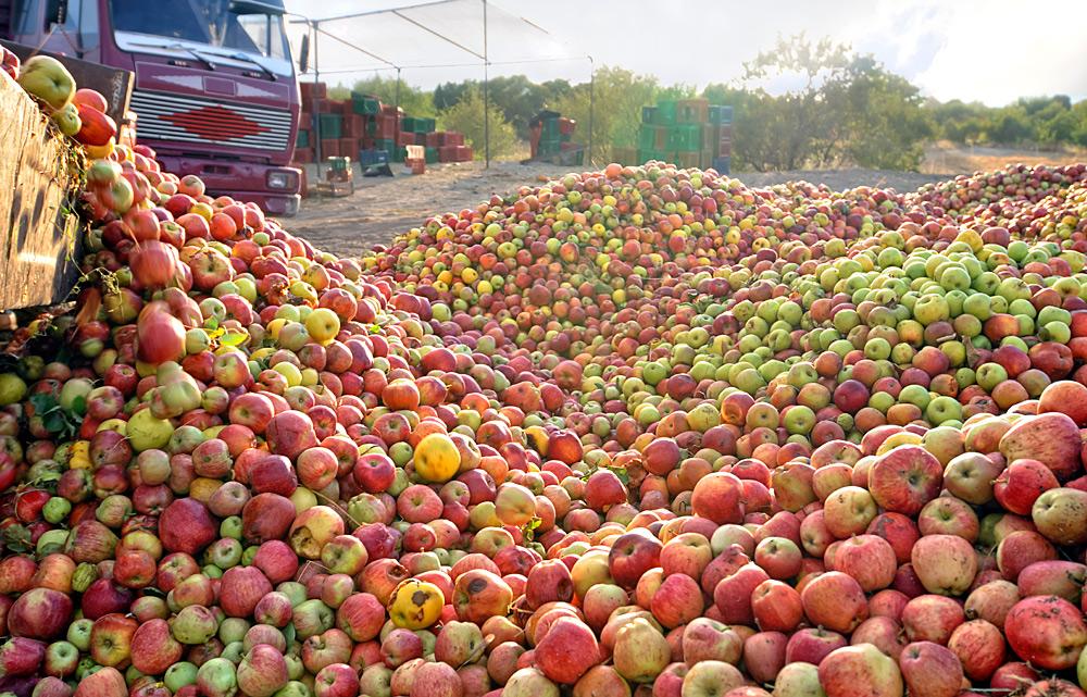 Яблочный спас по польски