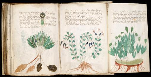 Cтраница из манускрипта Войнича