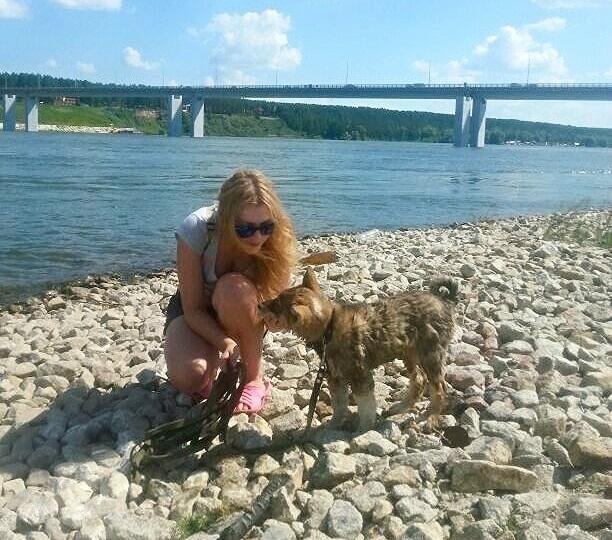 ВНовосибирске ревнивого мужчину осудят за беспощадное убийство собаки собственной возлюбленной