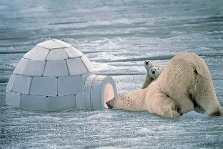 Иглу, эскимосы