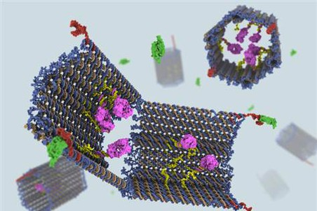 Роботы-оригами из ДНК в сложенном и разобранном состоянии