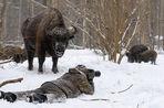 Фотограф-натуралист, совершающий путешествие по стране в честь 100-летия заповедной России, рассказал «Газете.Ru» о Камчатке, медведях и лисе Алисе