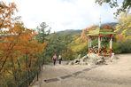 Никитский ботанический сад в Крыму готовится к вхождению в российские структуры