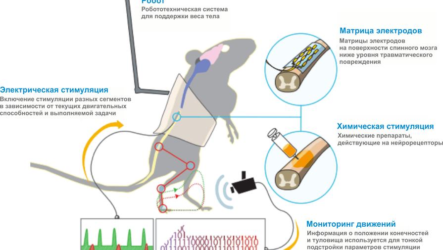 Схема действия метода пространственно-временной нейромодуляции
