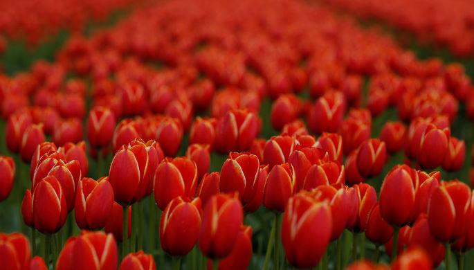 ВКанаде словили маньяка, который прятал трупы вгоршках сцветами