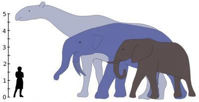 Млекопитающие выросли после гибели