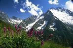 Растения забираются в горы, спасаясь от глобального потепления, выяснили российские ученые