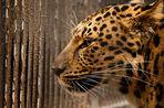 «Ловушки на леопардов» в пустынях Средней Азии использовались начиная с IV тысячелетия до нашей эры
