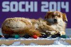 Власти Сочи и МОК опровергли слухи о варварском истреблении в городе бездомных собак