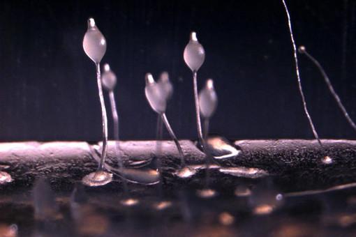 Амебы-фермеры сползаются в единый организм