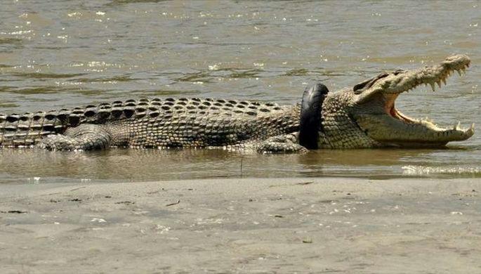 ВМексике подозреваемого визнасиловании бросили ввольер скрокодилами