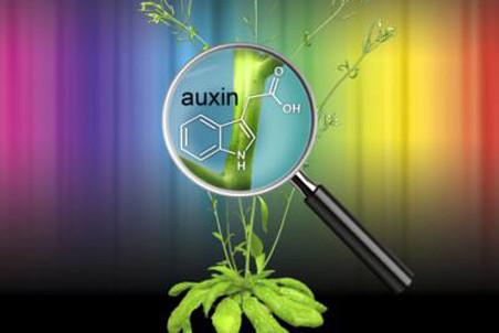 Как светолюбивые растения избегают тени