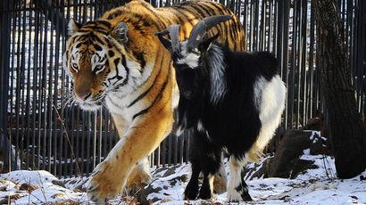 Почему мир людей так потрясла история дружбы из мира животных