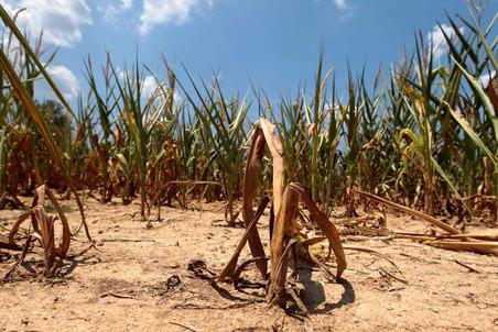 Плохие погодные условия в США взвинтили цены на продовольствие