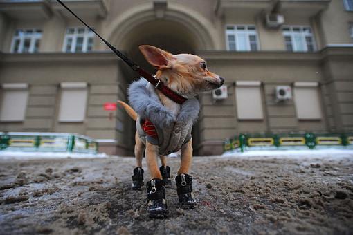В Санкт-Петербурге владельцев собак заставят брать на прогулку ветпаспорт