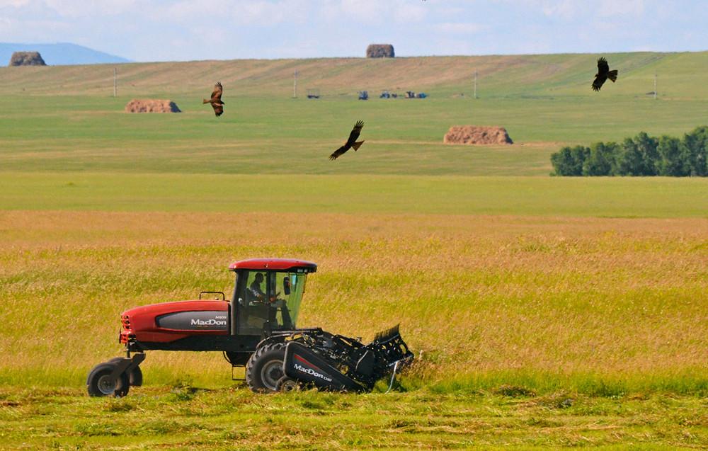 Южный Урал использует опыт Аргентины в сельском хозяйстве