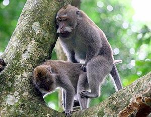 Секс у обезьяна