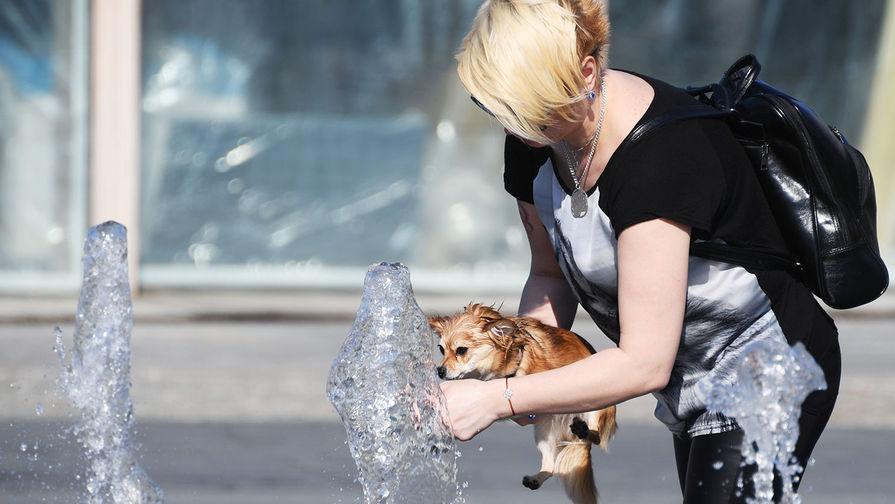 Ветеринар рассказал, как позаботиться о домашних животных в жару