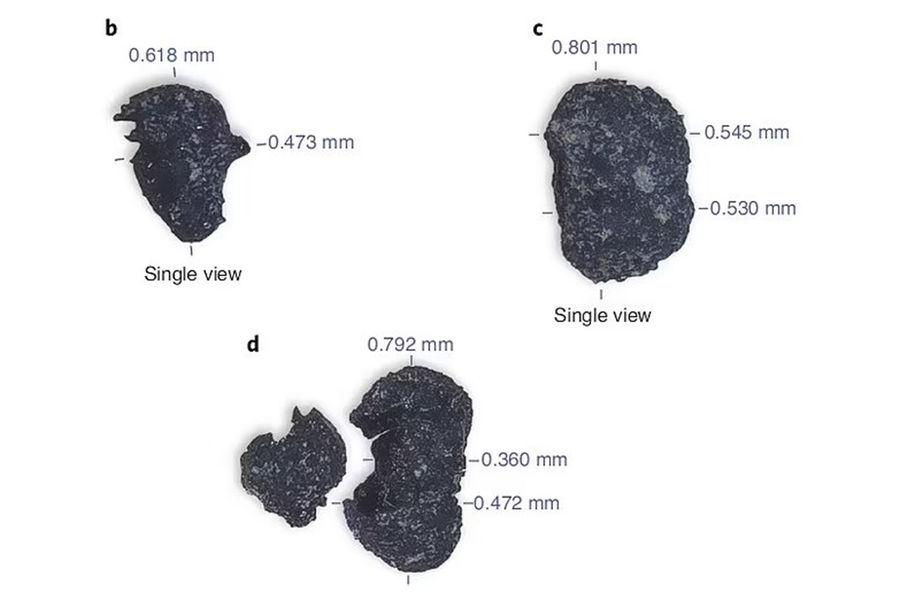 Обугленные семена табака, обнаруженные вдревнем очаге научастке Вишбоун, штат Юта