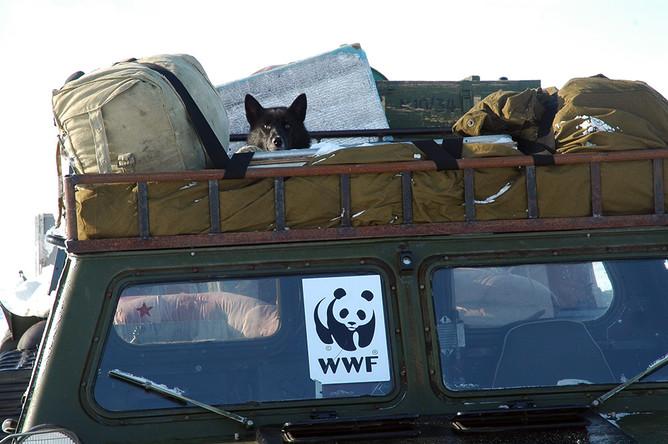 Чтобы добраться до медвежьих мест, патрульные используют вездеходы