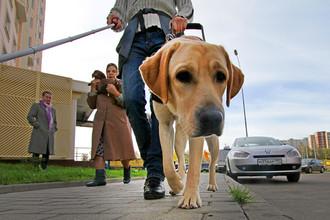 У слепой девушки украли собаку-поводыря
