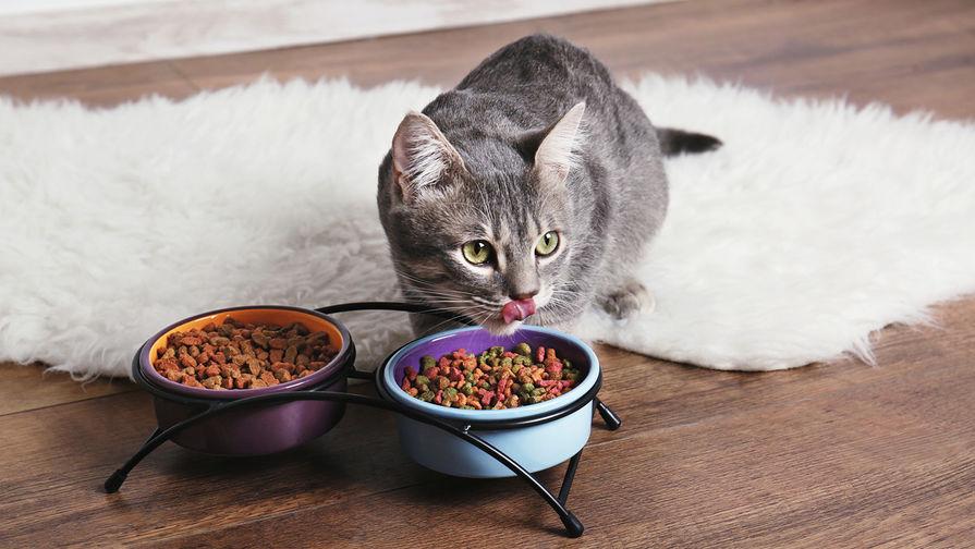 Ученые рассказали, как правильно кормить кошек
