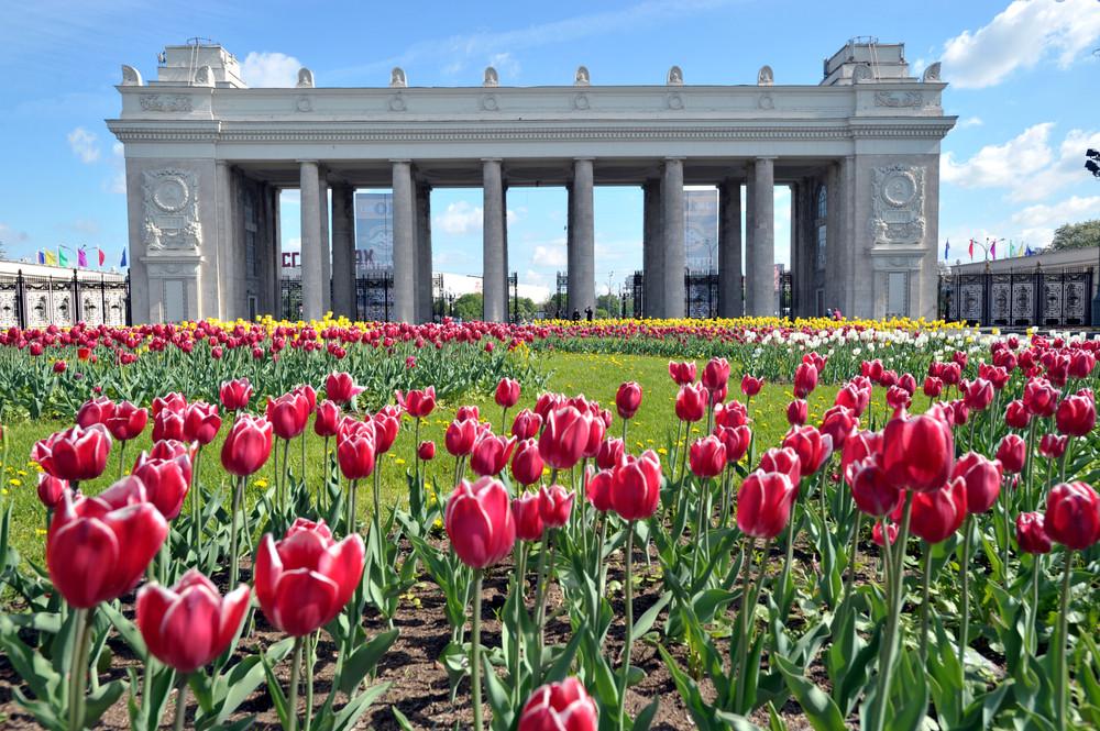 Картинки по запросу Московский парк Горького