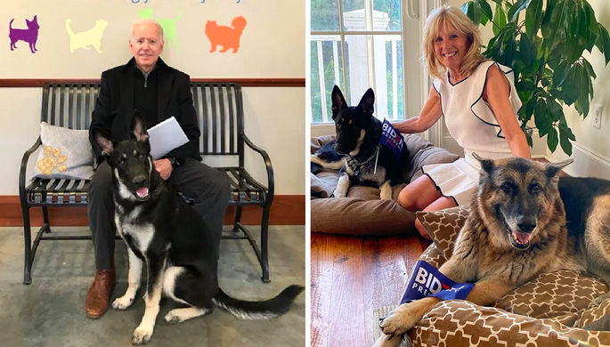 Возрождение традиций: в Белом доме поселились собаки