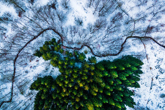 Лес на окраине города Нестведа, Дания (1-е место в категории «Природа»)