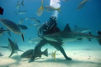 Акулы в подарок