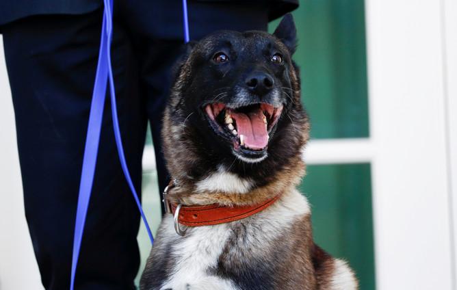 Служебный пес Конан у Белого дома в Вашингтоне, 25 ноября 2019 года