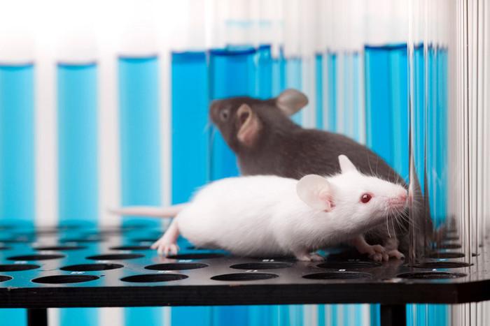 Пережитый мышатами в детстве стресс влияет на поведение их потомства