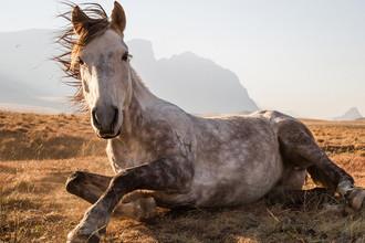 Этот снимок был сделан в национальном парке Селабатебе в Лесото. Лошадь, отдыхающая после трехдневного путешествия