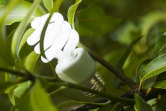 Фотосинтез представляет собой успешный пример того, как энергия солнца может превращаться в топливо