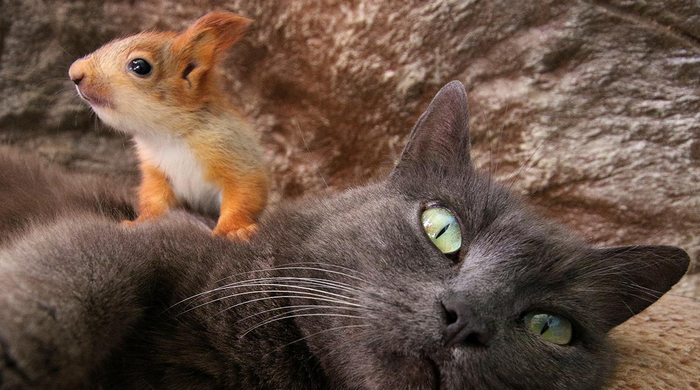 В Бахчисарае кошка усыновила бельчат