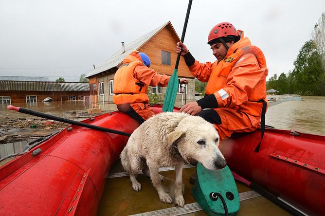 Спасатели работают в селе Майма, затопленном вышедшей из берегов рекой Катунью