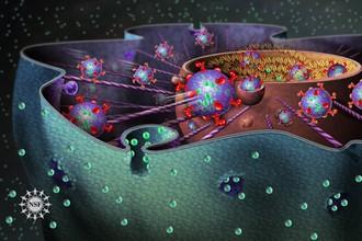 Как клетки сопротивляются стрессу