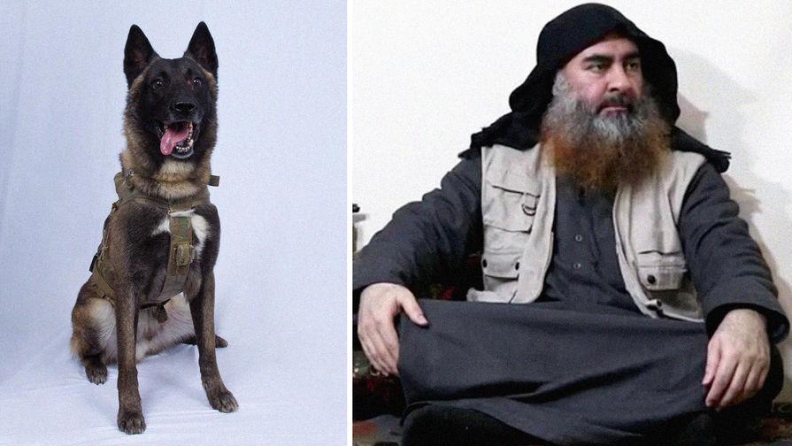 «Прекрасный пес»: Трамп раскрыл детали ликвидации аль-Багдади