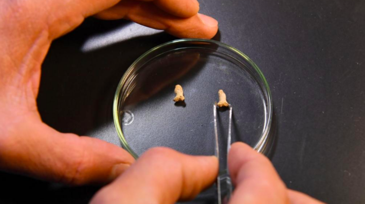 Останки неандертальца