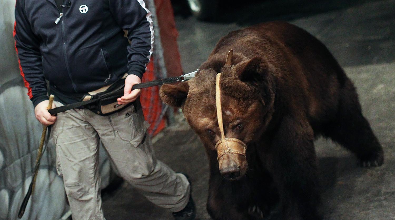 Новости о марихуане и медведях последствие курения конопли
