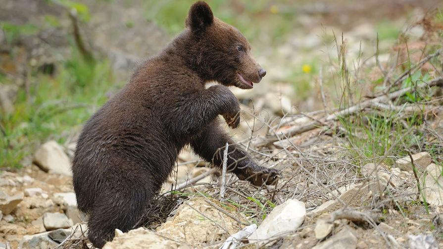 В Челябинской области спасли медвежонка