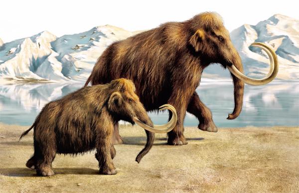 Ученые нашли место для жизни мамонтов