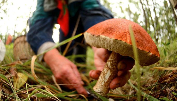 От диабета и рака: чем полезны грибы