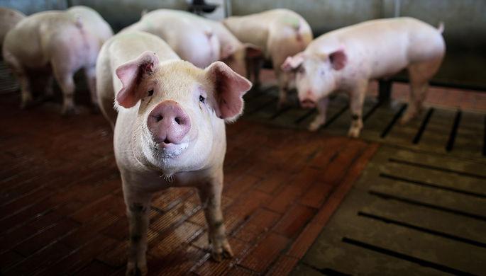 Чужие свиньи не нужны России