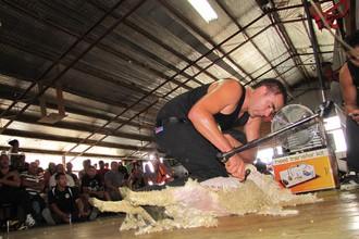 Стрижка овец предлагается в качестве олимпийского вида спорта