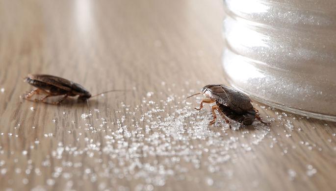 «Такие твари»: россиян ждет нашествие тараканов