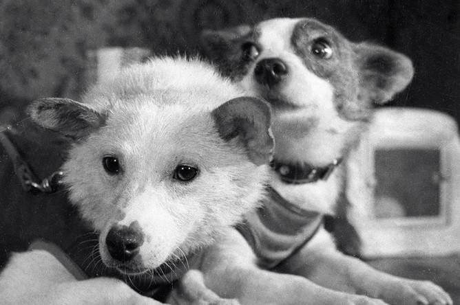 Четвероногие космонавты — собаки Белка и Стрелка, совершившие космический полет на корабле «Спутник-5» 19 августа 1960 года