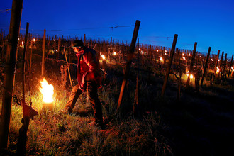 Защита виноградника от низких температур при помощи горящего парафина
